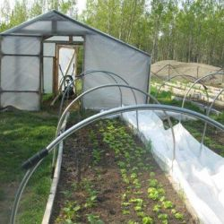 Raised-bed-and-hoop-house